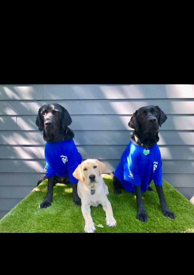 Each+of+Inky+Byers%27+dogs+go+through+2+years+of+training+before+they+are+even+paired+with+a+partner.
